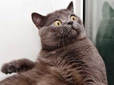 surprise-cat